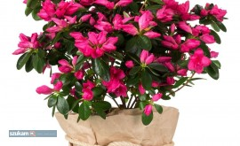 Bukiety kwiatowe nie ma kwarantanny