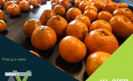 Pakowanie owoców i warzyw  Holandia  !!!