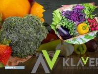 Praca przy pakowaniu owoców i warzyw w H