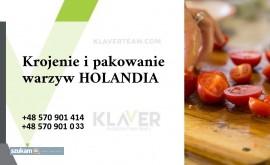 Produkcja sałatek obiadowych - Holandia