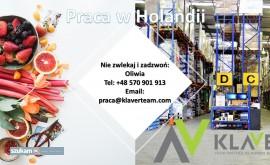 Praca na produkcji w Holandii